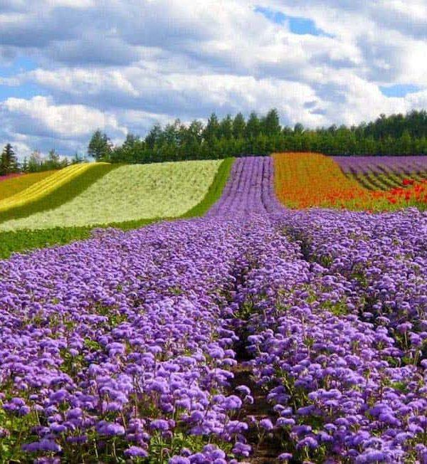 flower festival da lat