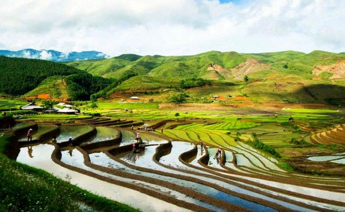 sapa rice fields