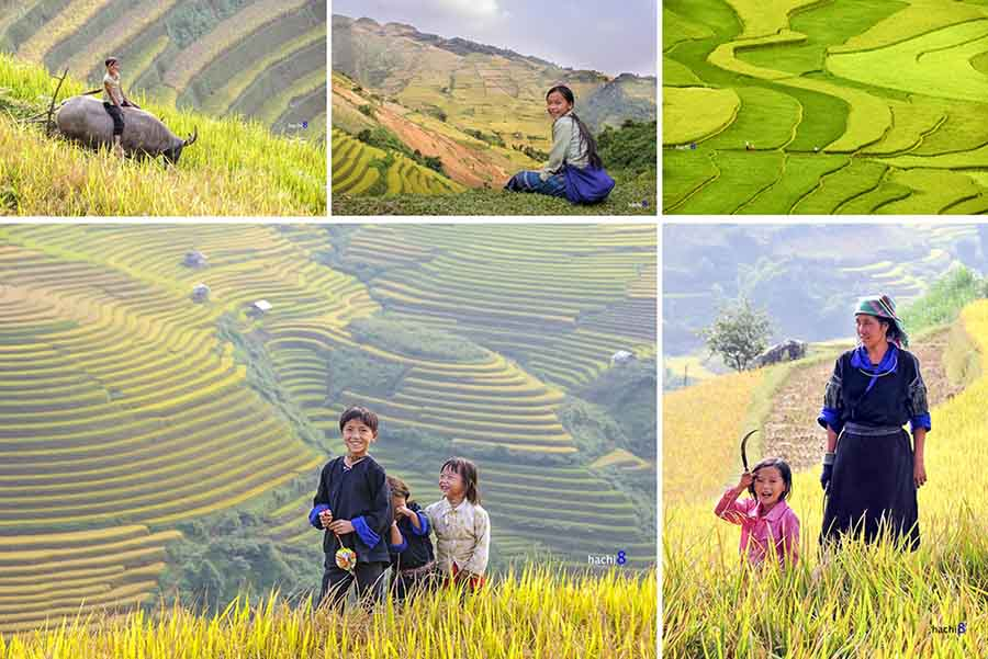 mu cang chai rice terrace season