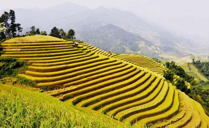 rice terrace mu cang chai