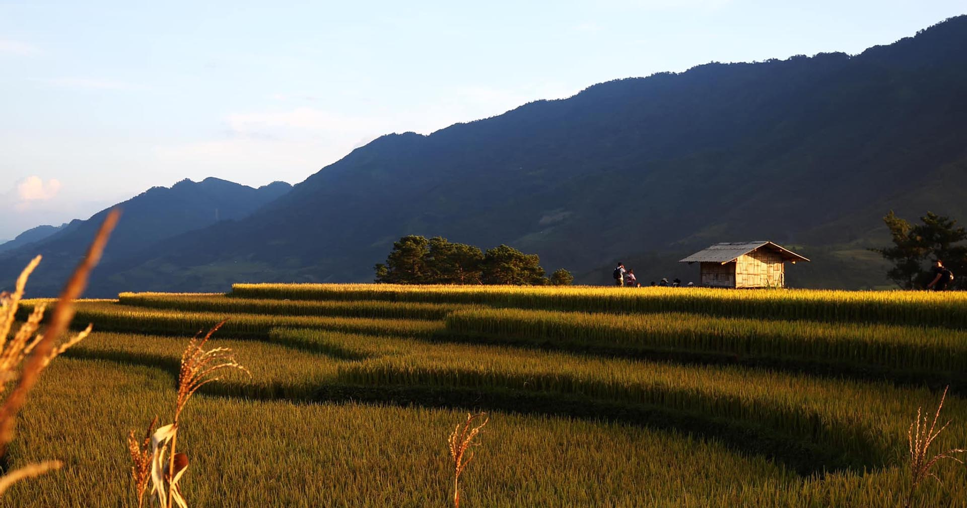 rice terrace season
